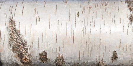 Foto de White birch bark, closeup background texture - Imagen libre de derechos