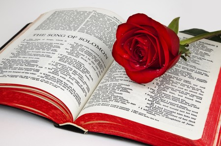 A single red rose rests upon the pages of an old bible open to the romantic chapter,