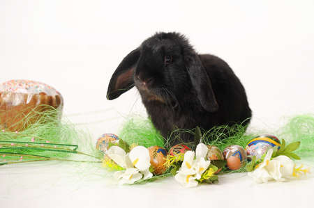 black easter bunny