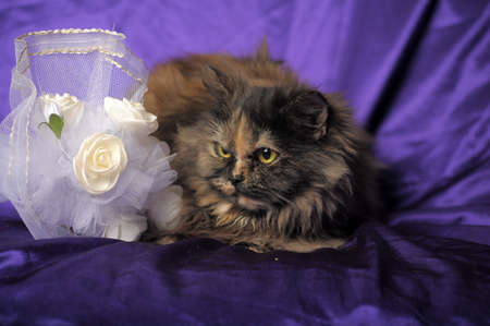 Persian cat and a wedding bouquet