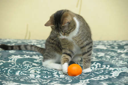 playful tabby cat