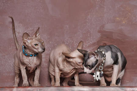 three sphinxes