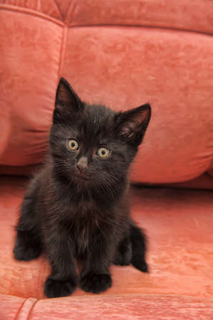 black kitten on the couch