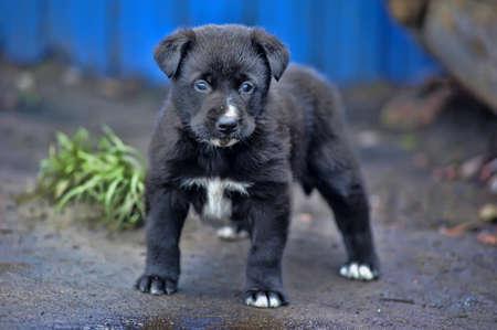 cute little black puppy