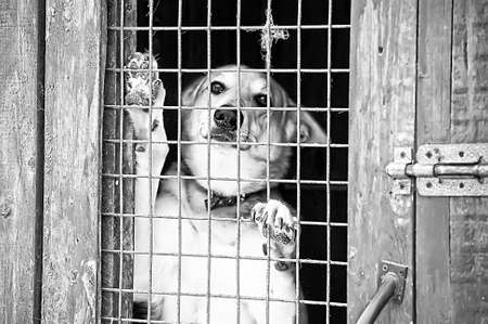 Homeless dogs shelter