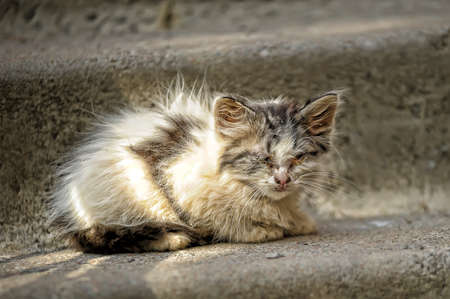 sick unhappy kitten in the street