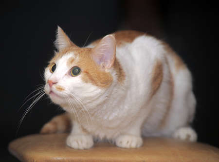 Nice red cat