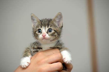 striped kitten in hand