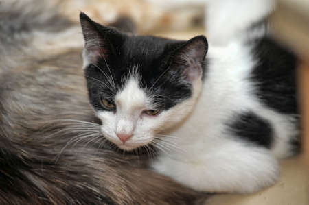 Photos of black and white cat