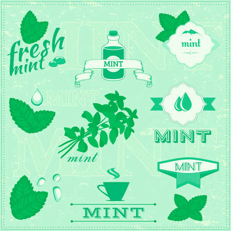 isolated herbs, mint vector leaves set illustration, peppermint backgroundのイラスト素材