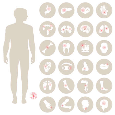 Illustration pour vector human anatomy, body bread medical illustration - image libre de droit