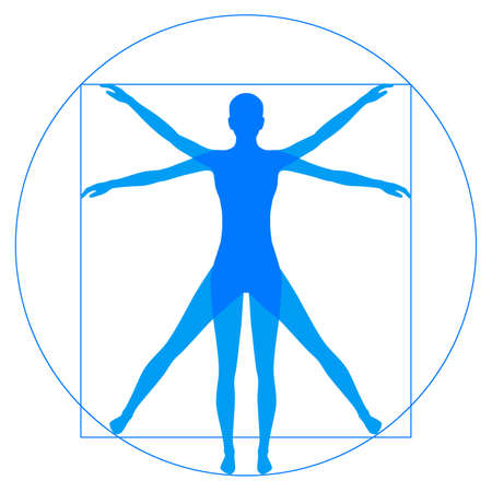 Illustration pour Leonardo Da Vinci Vetruvian Man, human anatomy - image libre de droit
