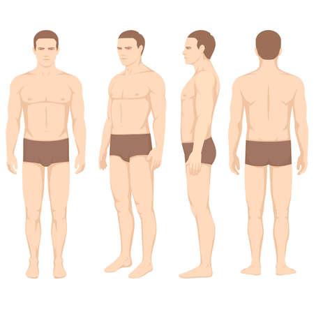 Ilustración de human body anatomy, vector man front back side - Imagen libre de derechos