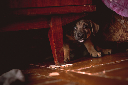 Photo pour Small Puppy Hiding Under Wardrobe - image libre de droit
