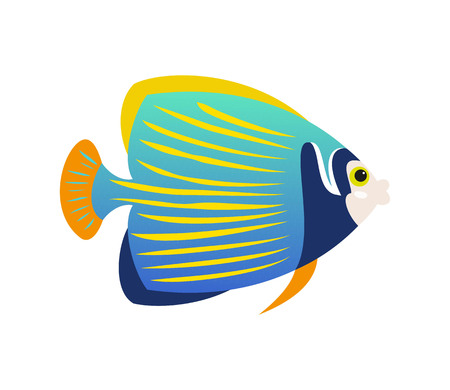 Tropical Emperor angelfish on white background. Vector illustration.