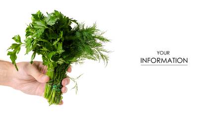 A bunch of parsley and dill in hand pattern on white background isolation
