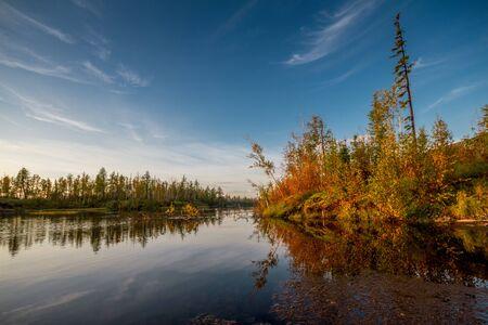 Photo pour Autumn tree - image libre de droit