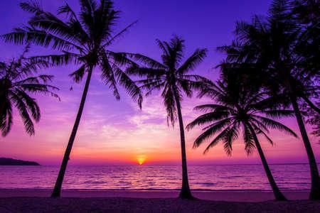 Photo pour Palm trees silhouette at sunset - image libre de droit