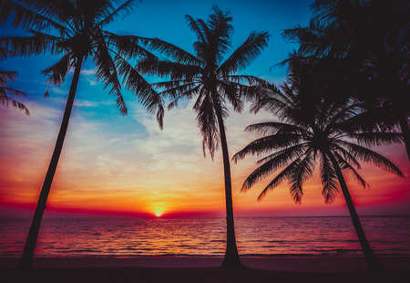 sunset tropical beach.