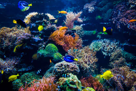 Photo pour beautiful underwater world - image libre de droit