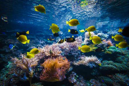 Photo pour Tropical Fish on a coral reef - image libre de droit