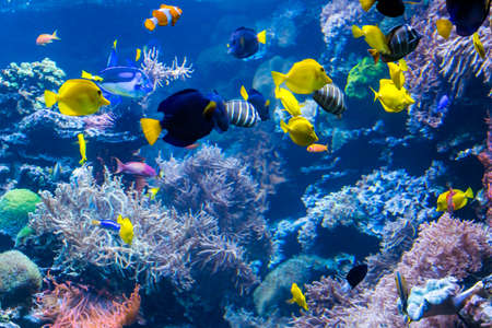 Photo pour Underwater Scene With Coral Reef And Tropical Fish - image libre de droit