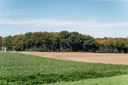 Photo for Field trees and blue sky. Field near a country road. - Royalty Free Image