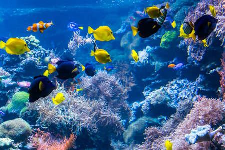 Photo pour underwater coral reef landscape with colorful fish and marine life - image libre de droit