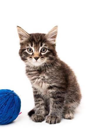 Photo pour kitten with balls of threads. little kitten on white background.  - image libre de droit
