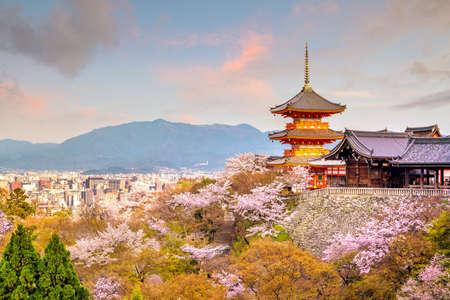Foto de Kiyomizu-dera Temple and cherry blossom season (Sakura) spring time in Kyoto, Japan - Imagen libre de derechos