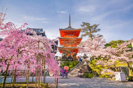Photo for Kiyomizu-dera Temple and cherry blossom season (Sakura) spring time in Kyoto, Japan - Royalty Free Image