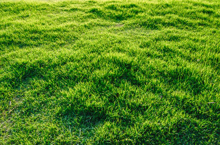Spring summer nature background with grass
