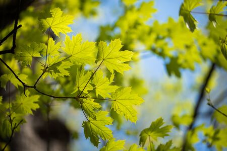 Photo pour Green tree leaves and branches with raindrops on the sky background - image libre de droit