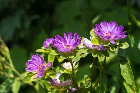 Group of small purple flowers