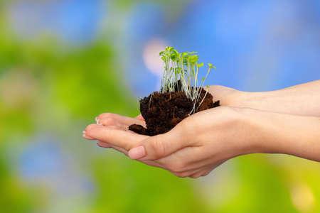 Photo pour Female palm holding soil with young plant sprouts - image libre de droit