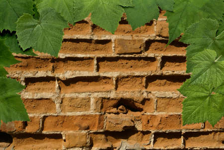 old brick wall with a decor from grape leaves.
