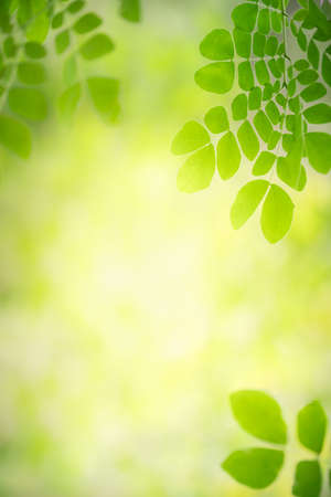 Foto de Beautiful nature view of green leaf on blurred greenery background in garden with copy space using as background natural green leaves plants landscape, ecology, fresh wallpaper concept. - Imagen libre de derechos