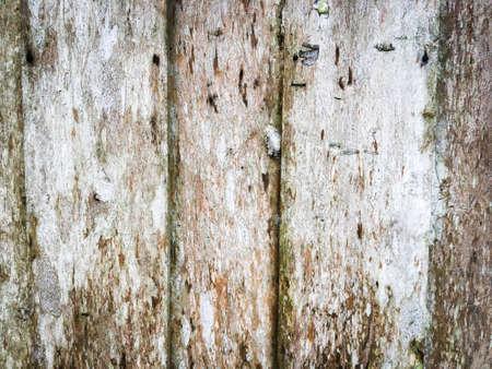 Photo pour Dirty wooden texture use as natural background for design - image libre de droit