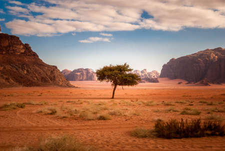 Photo for Lonely tree in the middle of the desert of Wadi Rum in Jordan, Middle East - Royalty Free Image