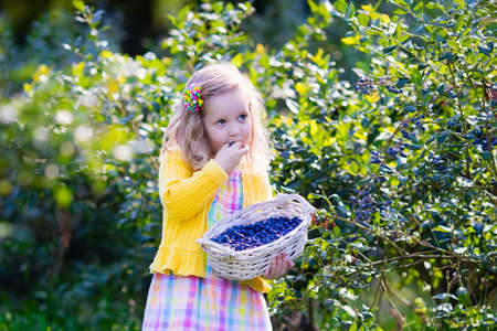 Kids picking fresh berries on blueberry field. Children pick blue berry on organic farm. Little girl playing outdoors in fruit orchard. Toddler farming. Preschooler gardening. Summer family fun.
