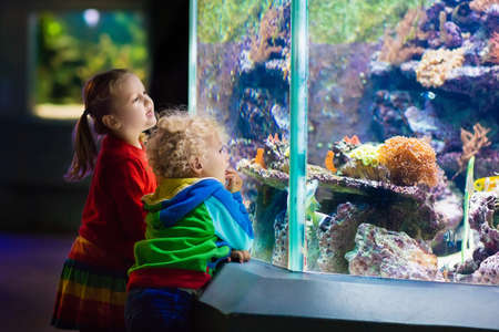 Photo for Little boy and girl watching tropical coral fish in large sea life tank. Kids at the zoo aquarium. - Royalty Free Image