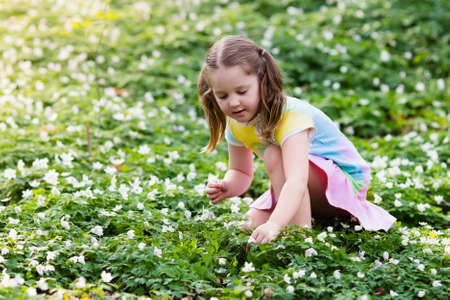 Photo for Cute little girl in pink dress playing in blooming spring park with first white wild anemone flowers. Child on Easter egg hunt in blooming garden. Kids play outdoor picking flower bouquet. - Royalty Free Image