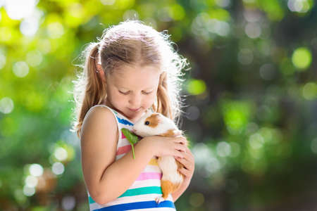 Child playing with guinea pig. Kids feed cavy animals. Little girl holding and feeding domestic animal. Children take care of pets. Preschooler kid petting hamster. Pet rodents. Trip to zoo or farm.の写真素材