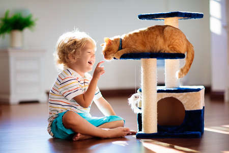 Foto per Child playing with cat at home. Kids and pets. Little boy feeding and petting cute ginger color cat. Cats tree and scratcher in living room interior. Children play and feed kitten. Home animals. - Immagine Royalty Free