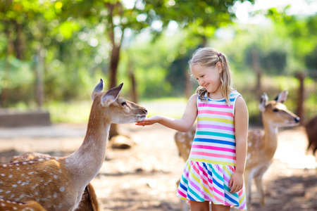 Foto de Child feeding wild deer at petting zoo. Kids feed animals at outdoor safari park. Little girl watching reindeer on a farm. Kid and pet animal. Family summer trip to zoological garden. Herd of deers. - Imagen libre de derechos