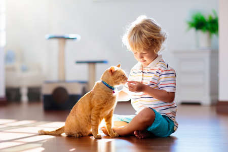 Photo pour Child playing with cat at home. Kids and pets. Little boy feeding and petting cute ginger color cat. Cats tree and scratcher in living room interior. Children play and feed kitten. Home animals. - image libre de droit