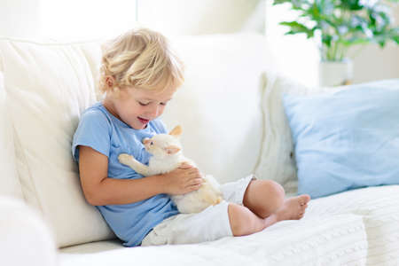 Photo pour Child playing with baby cat. Kid holding white kitten. Little boy snuggling cute pet animal sitting on couch in sunny living room at home. Kids play with pets. Children and domestic animals. - image libre de droit