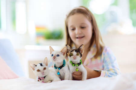 Photo pour Child playing with baby cat on bed in white bedroom. Kid holding white kitten. Little girl in pajamas with cute pet animal at home. Kids play with cats. Children and domestic animals pets. - image libre de droit