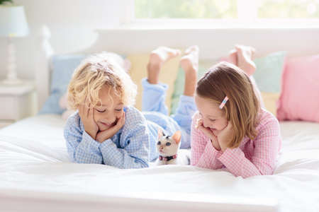 Photo pour Children play with baby cat in bed in white bedroom. Kid holding white kitten. Little girl and boy in pajamas with cute pet animal at home. Kids play with cats. Children and domestic animals pets. - image libre de droit