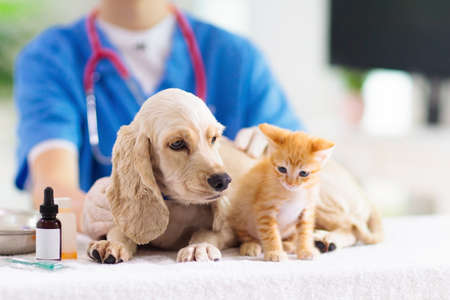Photo for Vet examining dog and cat. Puppy and kitten at veterinarian doctor. Animal clinic. Pet check up and vaccination. Health care for dogs and cats. - Royalty Free Image